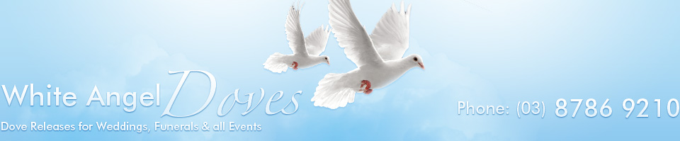 white angel doves