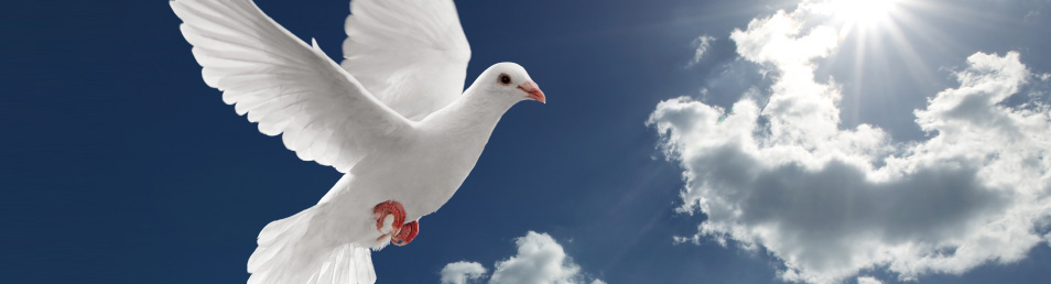 White dove releases for weddings or funerals in melbourne voltagebd Gallery